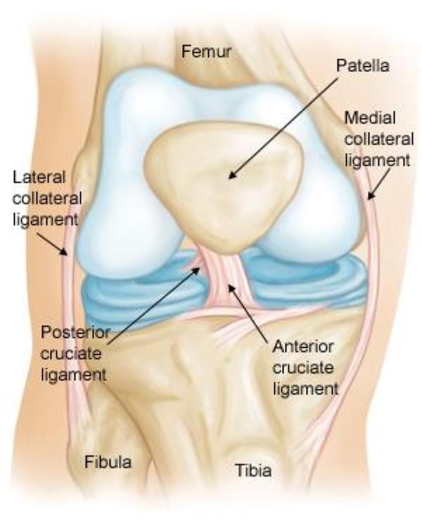 Multiligament knee injury